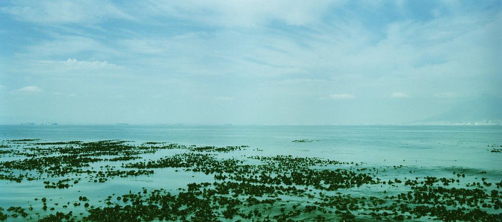 kelp1713.jpg