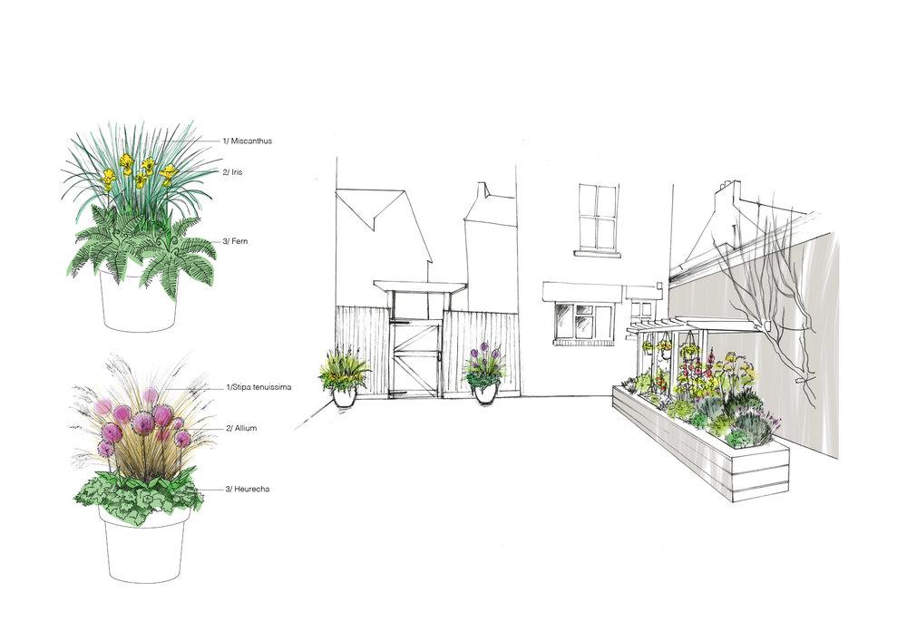 allium gardeners planting design