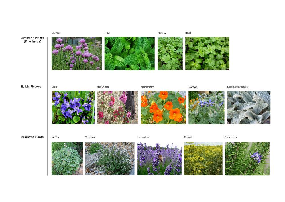Allium Gardeners Plant schedule