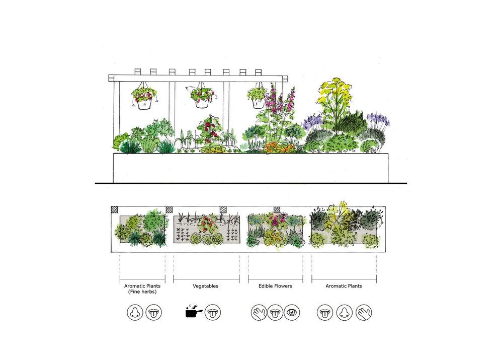 Allium gardeners plant design 2
