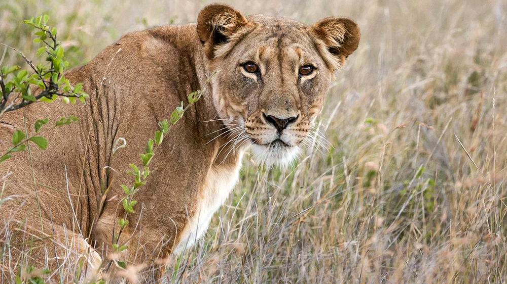 PEOPLE, PREDATORS AND PREY: CONSERVATION THROUGH SCIENCE