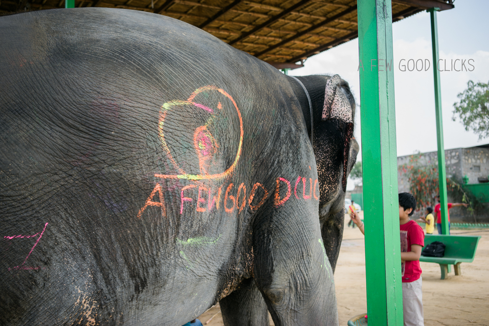 elefantastic-experience-jaipur-photography-afewgoodclicks.net-30.jpg