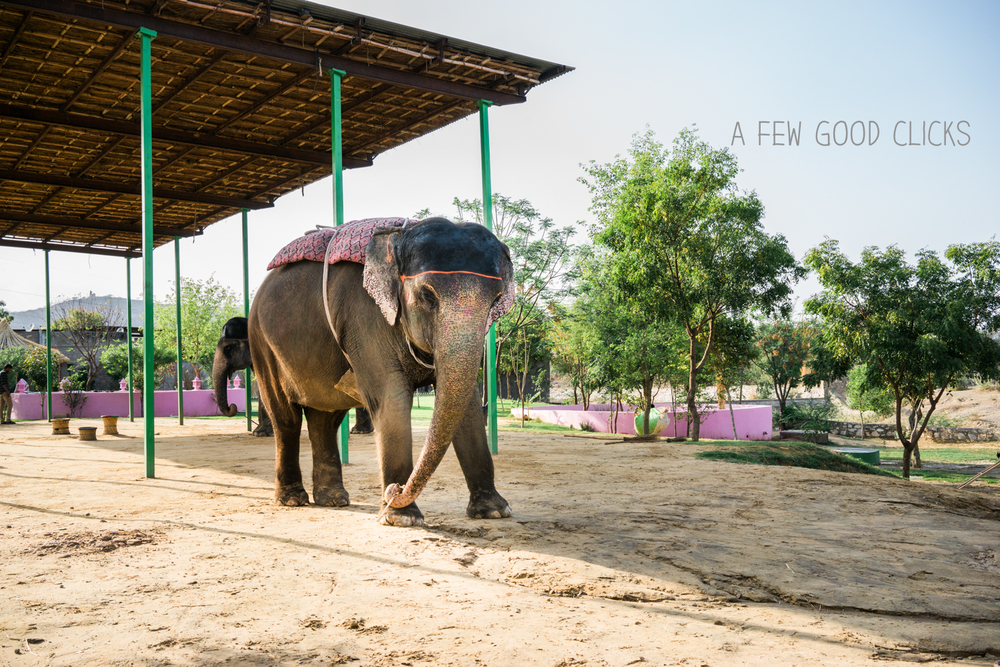 Chanchal is all set for a bareback ride in the elephant village.