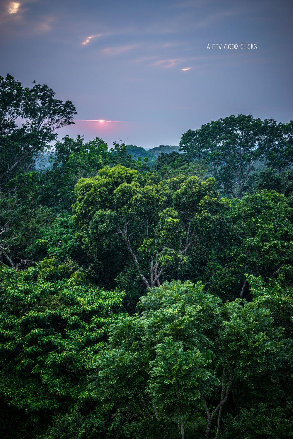 Sunrise from canopy tower in Peruvian Amazon near Refugio Amazonas lodge
