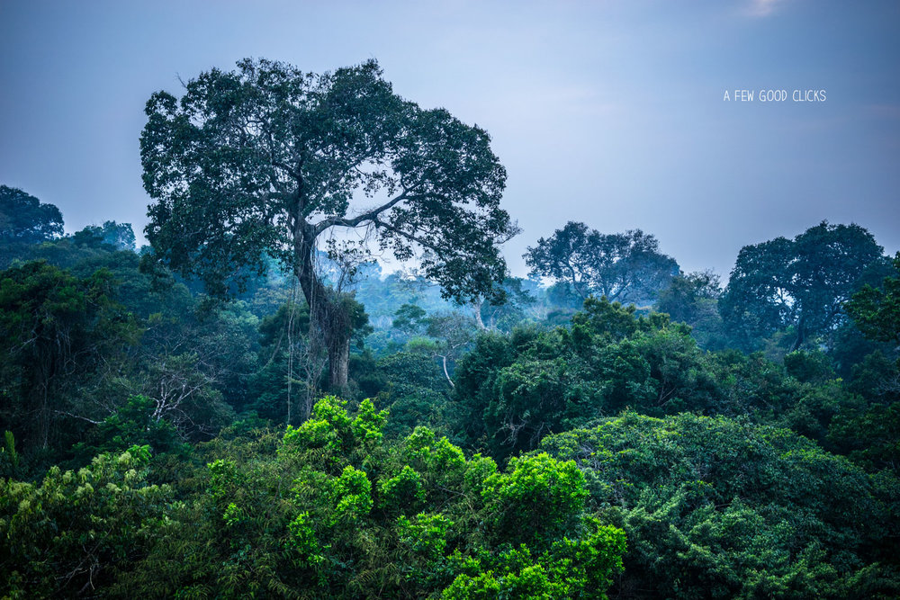 Peruvian Amazon Rainforest before the sunrise from 30 ft above the ground