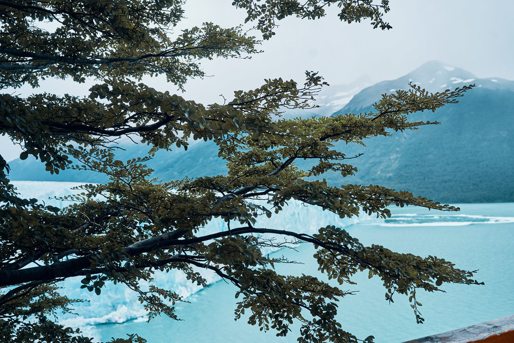 Glacier viewing through the trees.