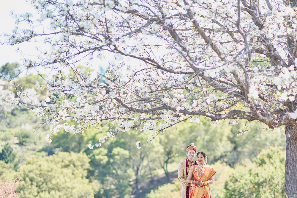 Portrait of Bride & Groom under the sakura tree at Saratoga Country Club, CA.