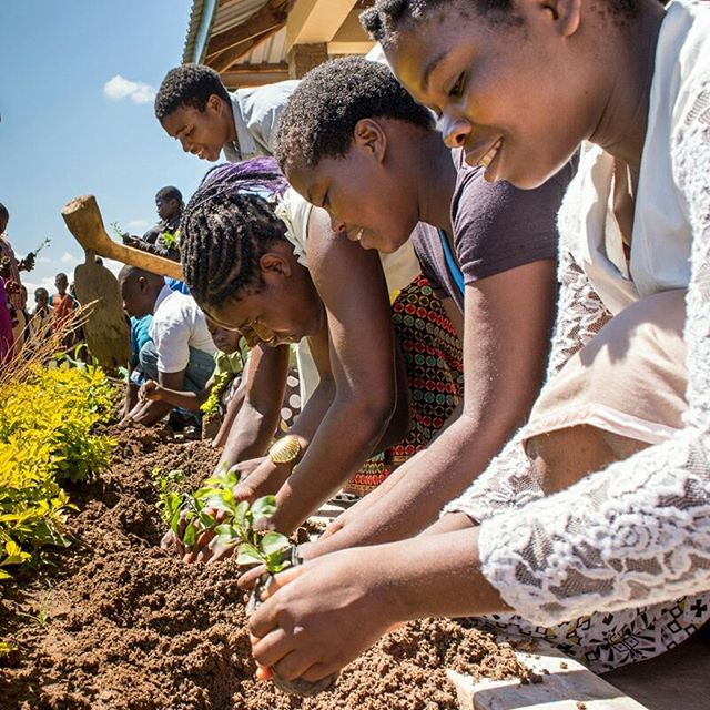 First big Saturday event of 2018: gardening and planting trees. Thuchila and Kogoya Hope Centers both took advantage of a sunny break between the rains to re-forest our land, planting trees, shrubs, and flowers all around the property. We can't re-forest Malawi alone, but we can at least do our part!⠀ .⠀ .⠀ .⠀ #miqlat #malawi #deforestation #thuchila #africa #girls #girlchild #plant #garden #savetherainforest #nonprofit #child #sponsorachild #childsponsorship #trees #workworkwork