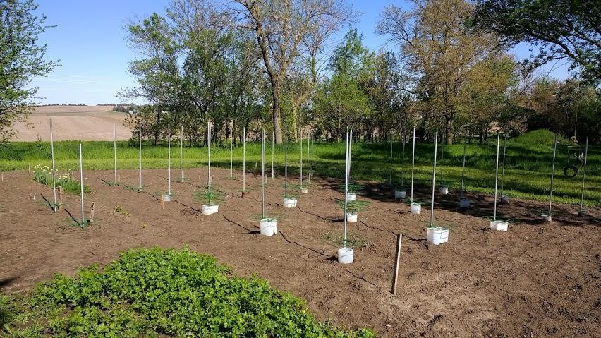 garden-start.jpg