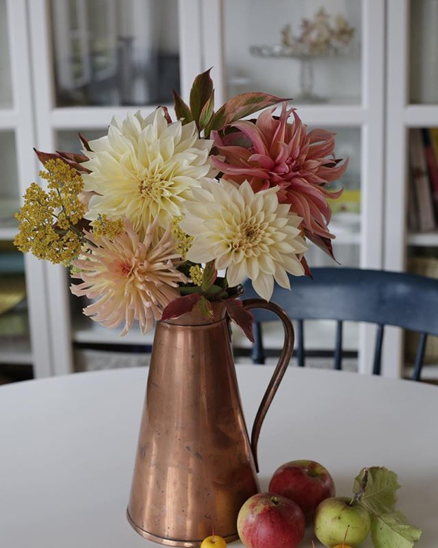 The last of my dahlias...
