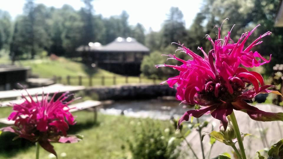 In A Flower.jpg