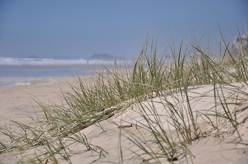Sand dunes, Surfers Paradise
