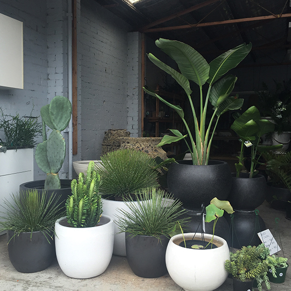 The Pot Warehouse, Mona Vale