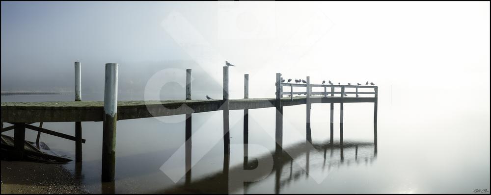 kellys bay fog