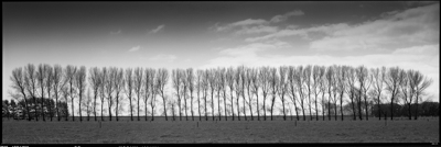 springtrees003-Edit.jpg