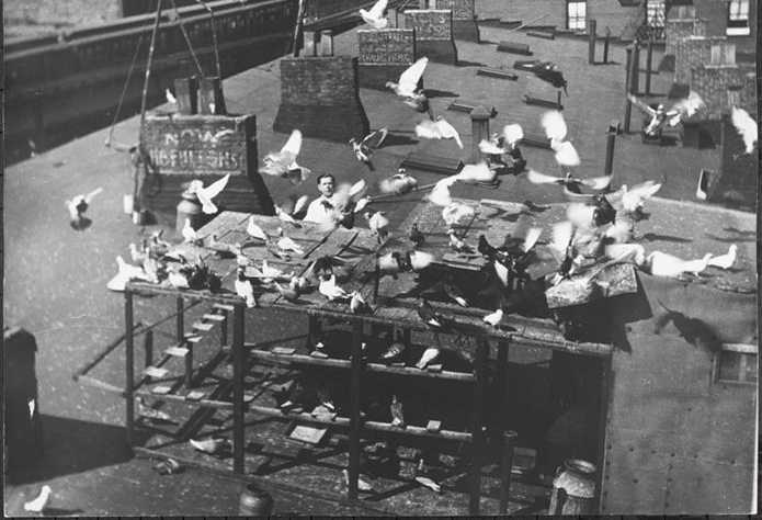 The Lower East Side used to be full of pigeon coops for food and for entertainement.