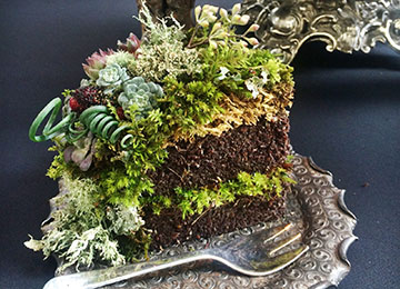 "A slice of ""cake"" fit for a fairy."