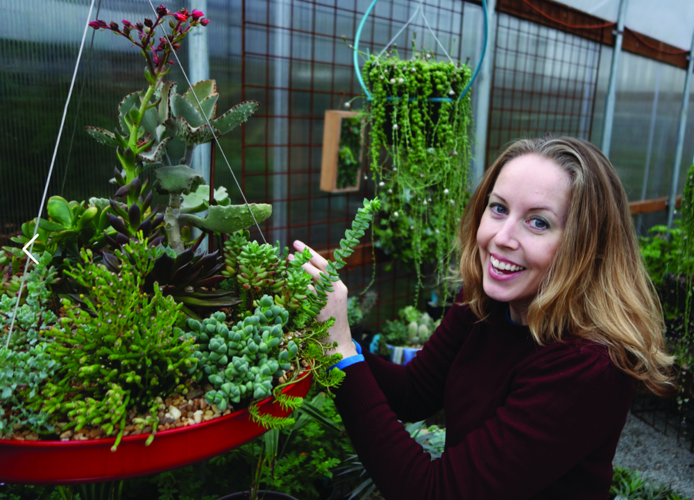Mari Malcolm at work in the DIG Nursery greenhouse, adding a trailing succulent to hang down over the edge of a lightweight hover dish, from Pot Inc. (by Sylvia Matlock for The Seattle Times)