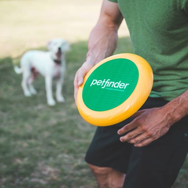 frisbee-4.jpg