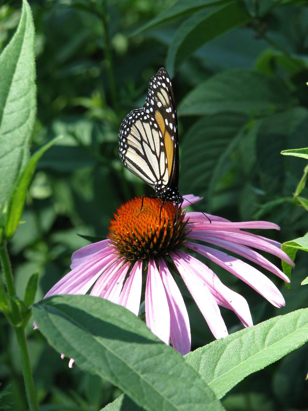 bloggerfly u2014 butterfly ridge