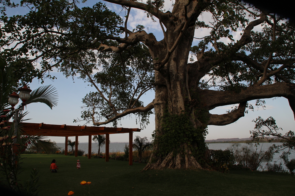 Overlooking Lake Tana. The large lake sits at a high elevation and is a great climate for shade-grown coffee on the Zegie peninsula, Dek island, or one of the many monastery islands on the lake!