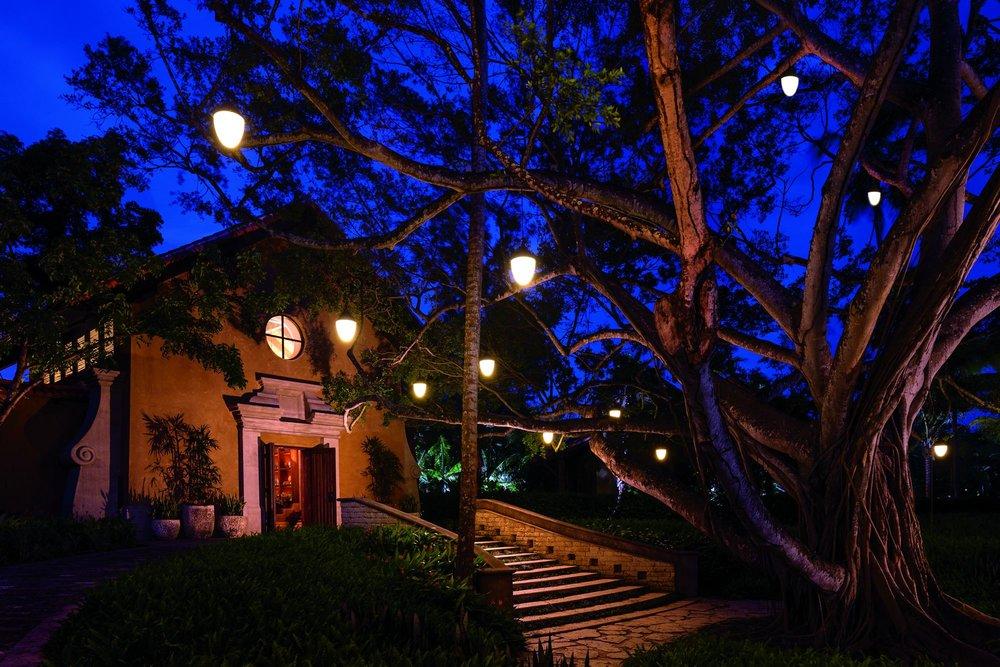 Dorado Spa Tree.jpeg
