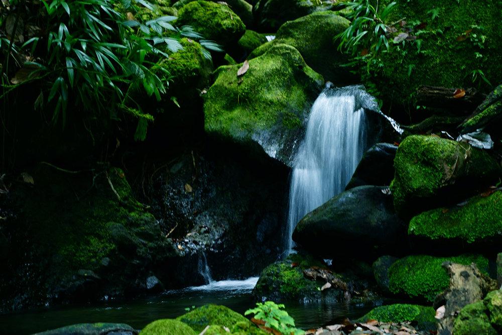 Dominica_emerald-pool-small-fall.jpg