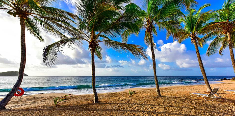 CB Beach Palms.png
