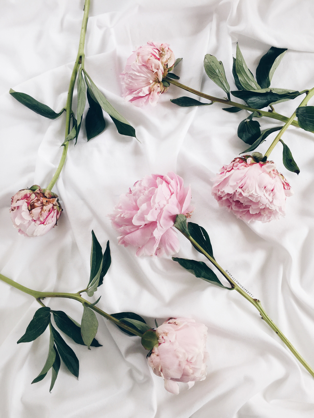 Dress Up Your Tech Peony Wallpaper For All Things Pretty