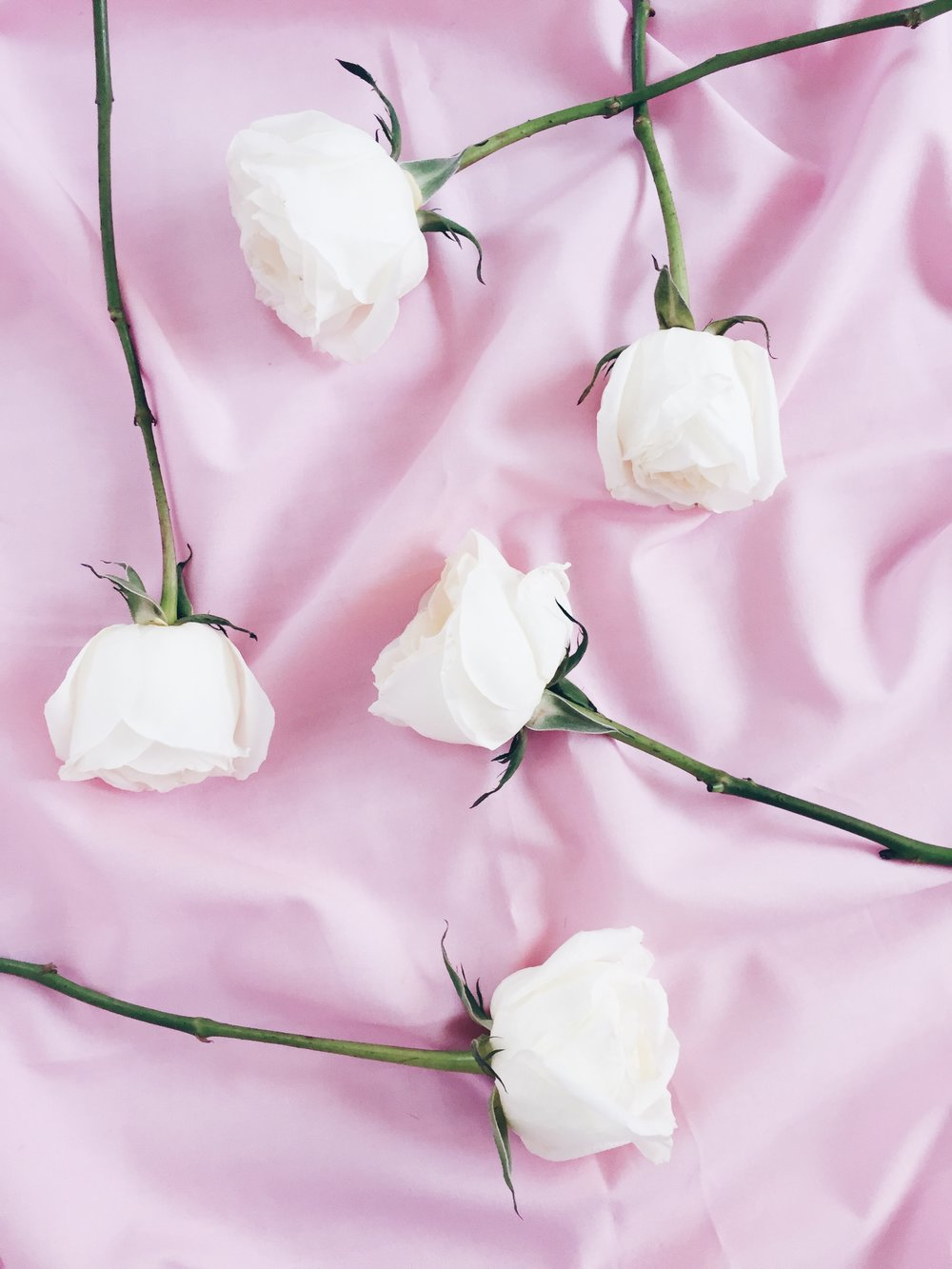 Pink And White Roses Wallpaper Roses Gallery