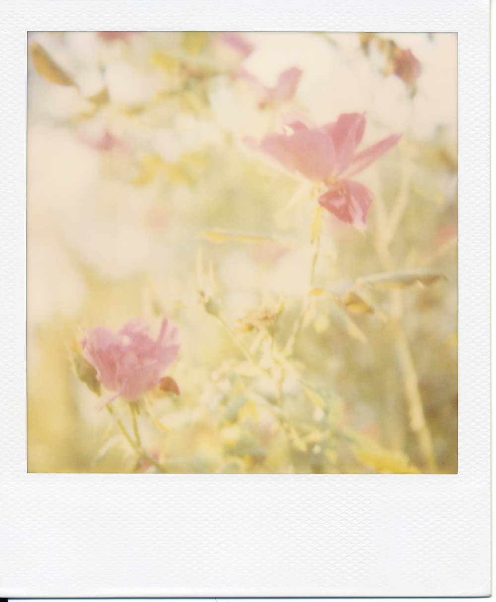 Polaroid (5)final.jpg