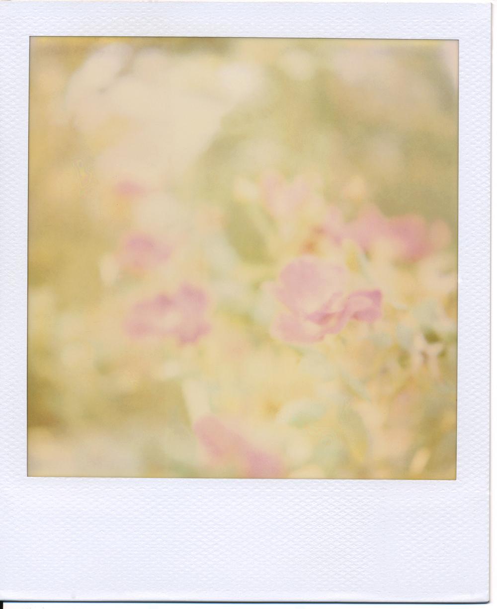 Polaroid (4)final.jpg