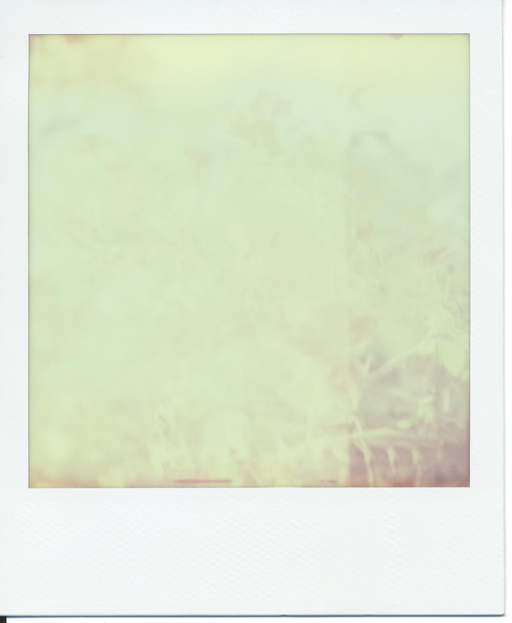 Polaroid (3)final.jpg