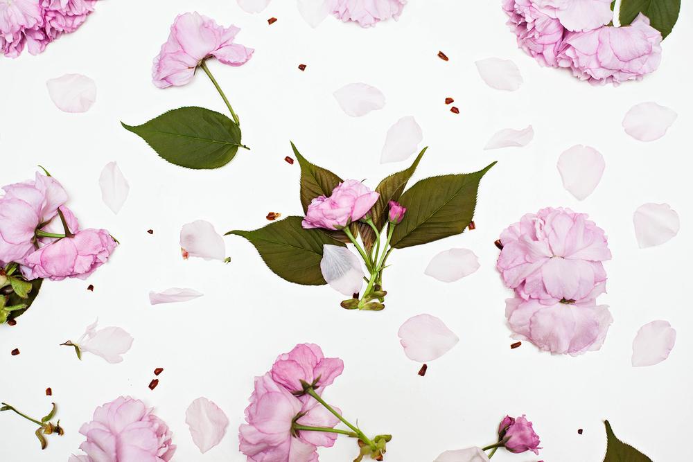Blossoms_2s.jpg