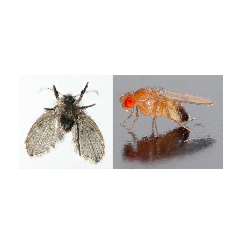 Fruit Flies In Your Commercial Kitchen? — Guardian Drain Lock