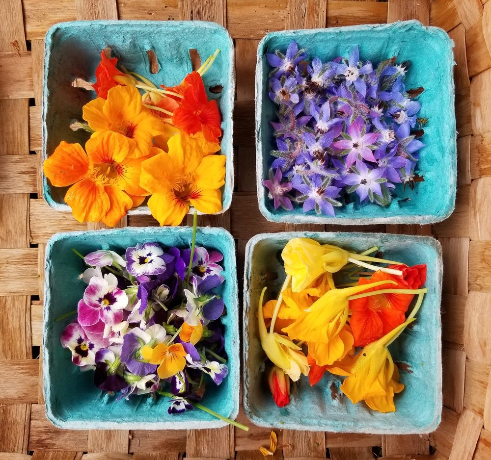 Edible flowers: Nasturtium, Borage, and Pansy.
