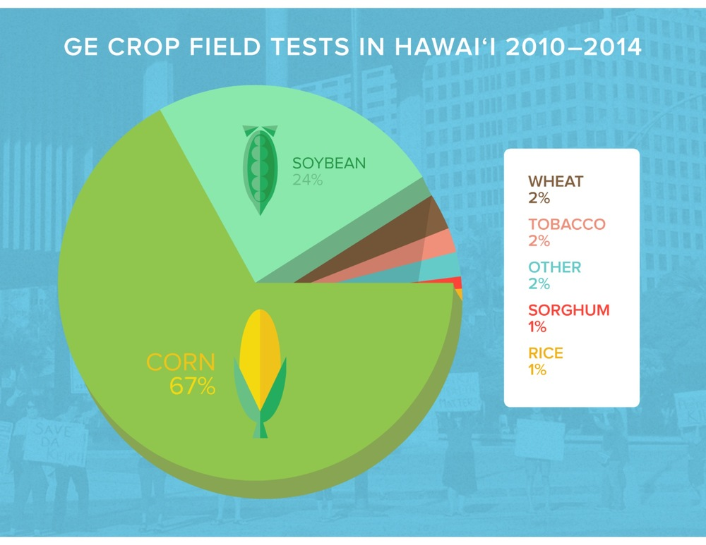 The vast majority (91%) of the plants being tested are corn and soy—not niche crops such as papaya or banana.