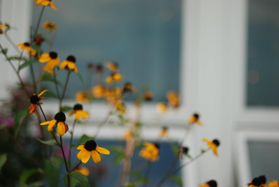 Kahlon_Satpreet_Flowers01.jpg