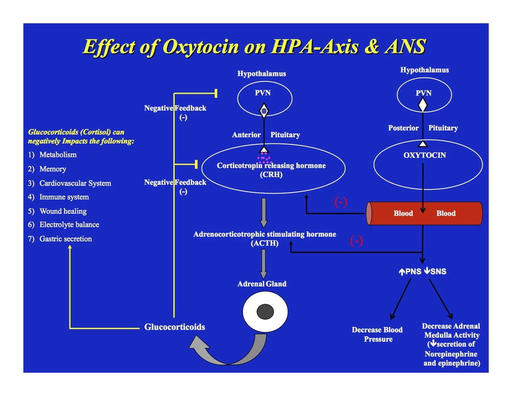 Figure 1. Impact of Oxytocin on the Stress-Response Pathways.
