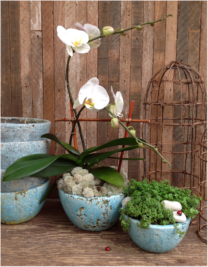 orchidpahl.jpg