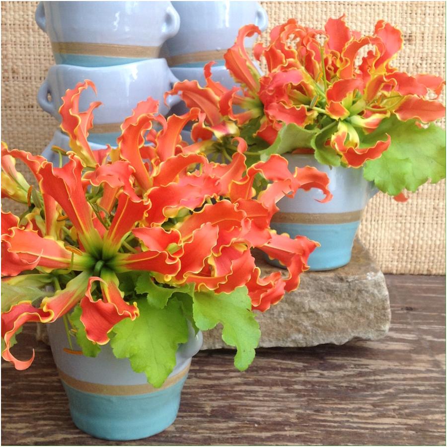 gloriosa lillies.jpg