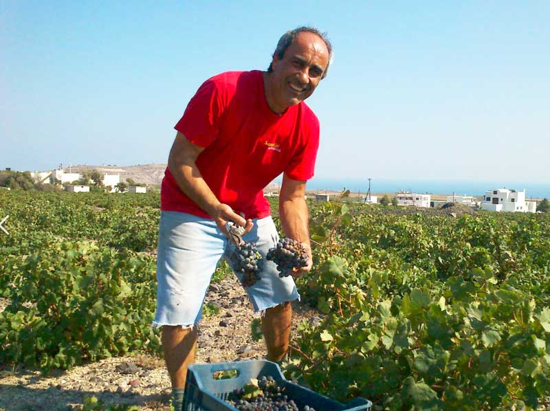 Mr. Gavalas : a dedicated and passionate Santorini Wine Maker