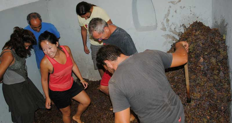 If you visit Gavalas Winery in August you may try the foot crushing of the grapes!