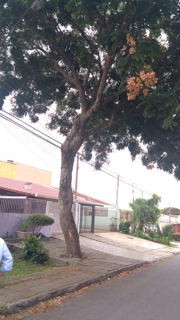 Rua José Fabiano Barcik, 724 Sra Daiane tem protocolos.jpeg
