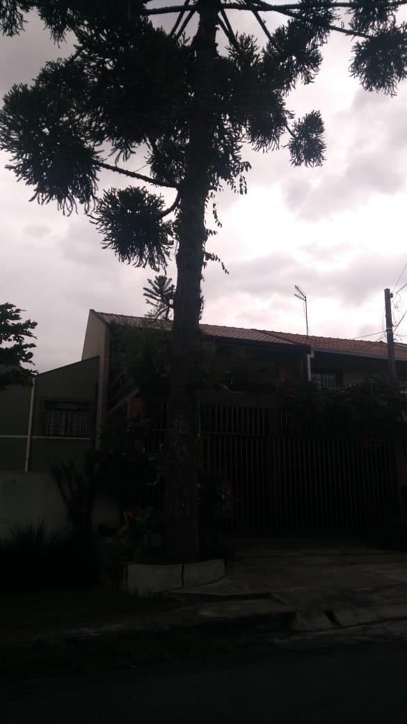 Rua Paulo de Frontin, 561 - abelha na copa, comprometeram a árvore. Sra Filisbina..jpeg