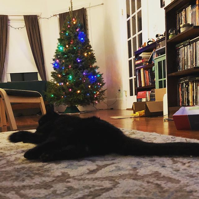 Henry James + Viggo McSorley  #blackcatsaregoodluck #catsandtrees #catsarethebest