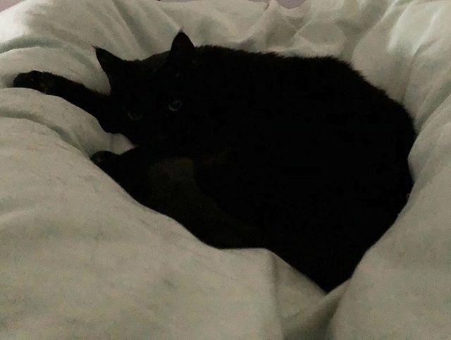 Hen.  #blackcatsofinstagram #blackcatsaregoodluck #ilovehenryjames