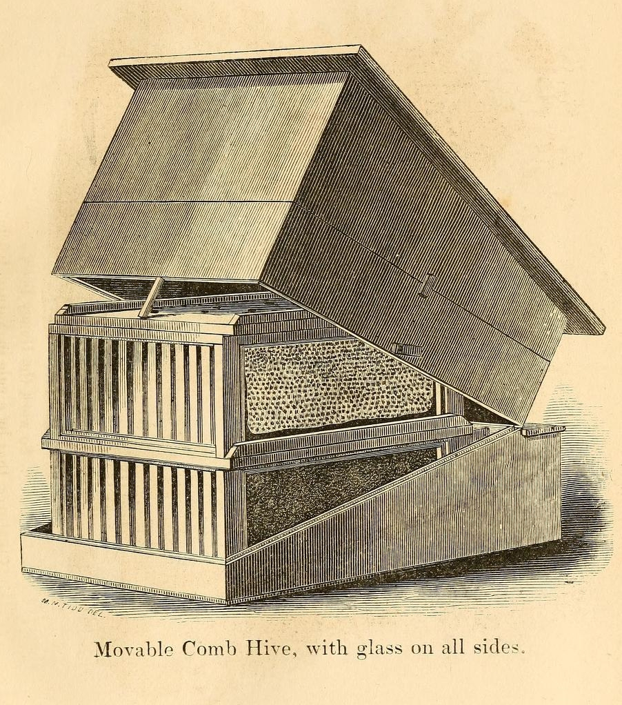 Movable comb hive, with glass on all sides. Image source:  A practical treatise on the hive and honey-bee, 2nd edition , 1857, frontispiece (assessed from the  Internet Archive , original contributor  Library of Congress ), by L. L. Langstroth, is licensed under  Public Domain Mark 1.0
