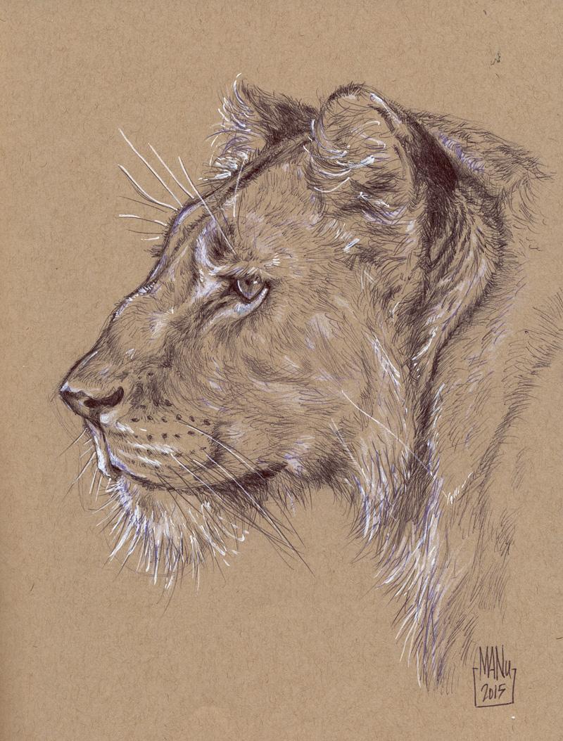 webballpoint_lioness.jpg