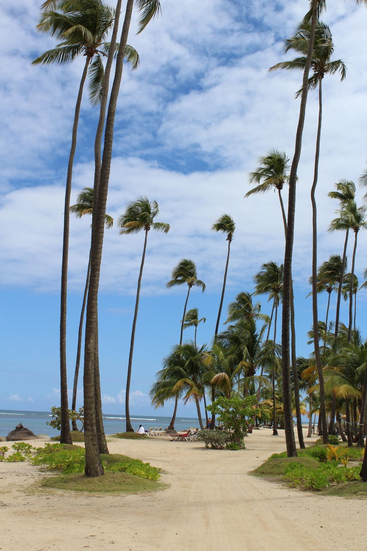 Coco Beach 3.jpg